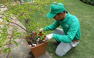 植木鉢のメンテナンス