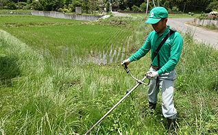 除草、土壌改良
